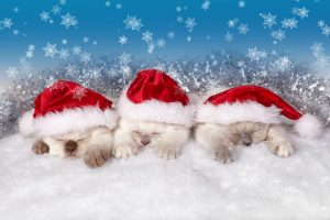 Three kittens dressed in Santa hats